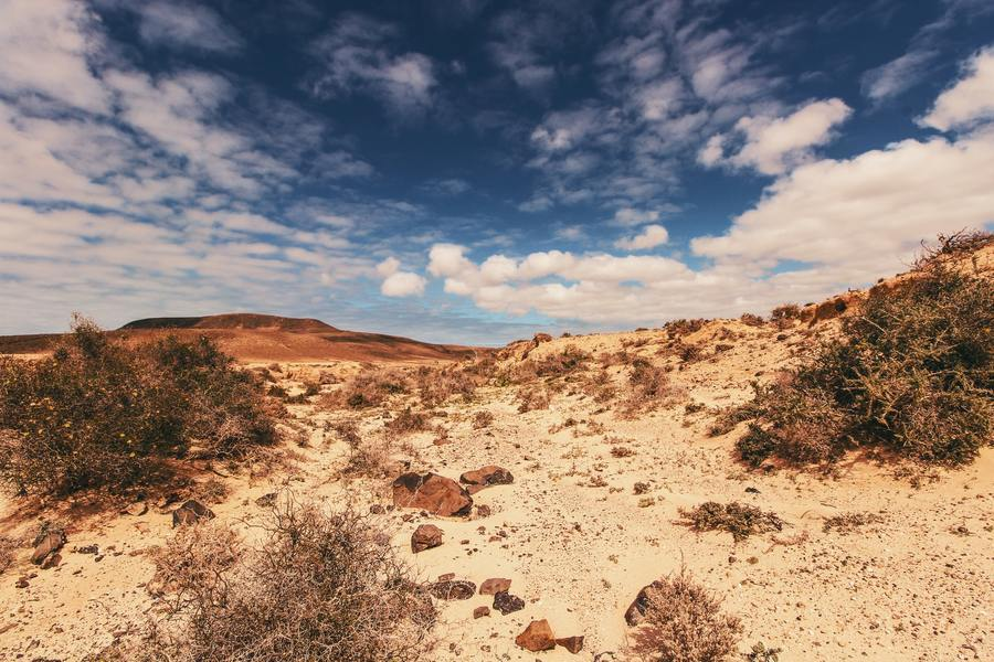 科學家發現,地底生物的數量多過地表生物,且這些生物能在高溫高壓的環境下存活。(p...