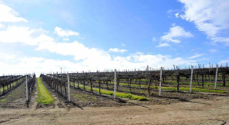 哈佛大學自2012年起,透過其附屬公司卜若地在加州收購大面積葡萄園。路透