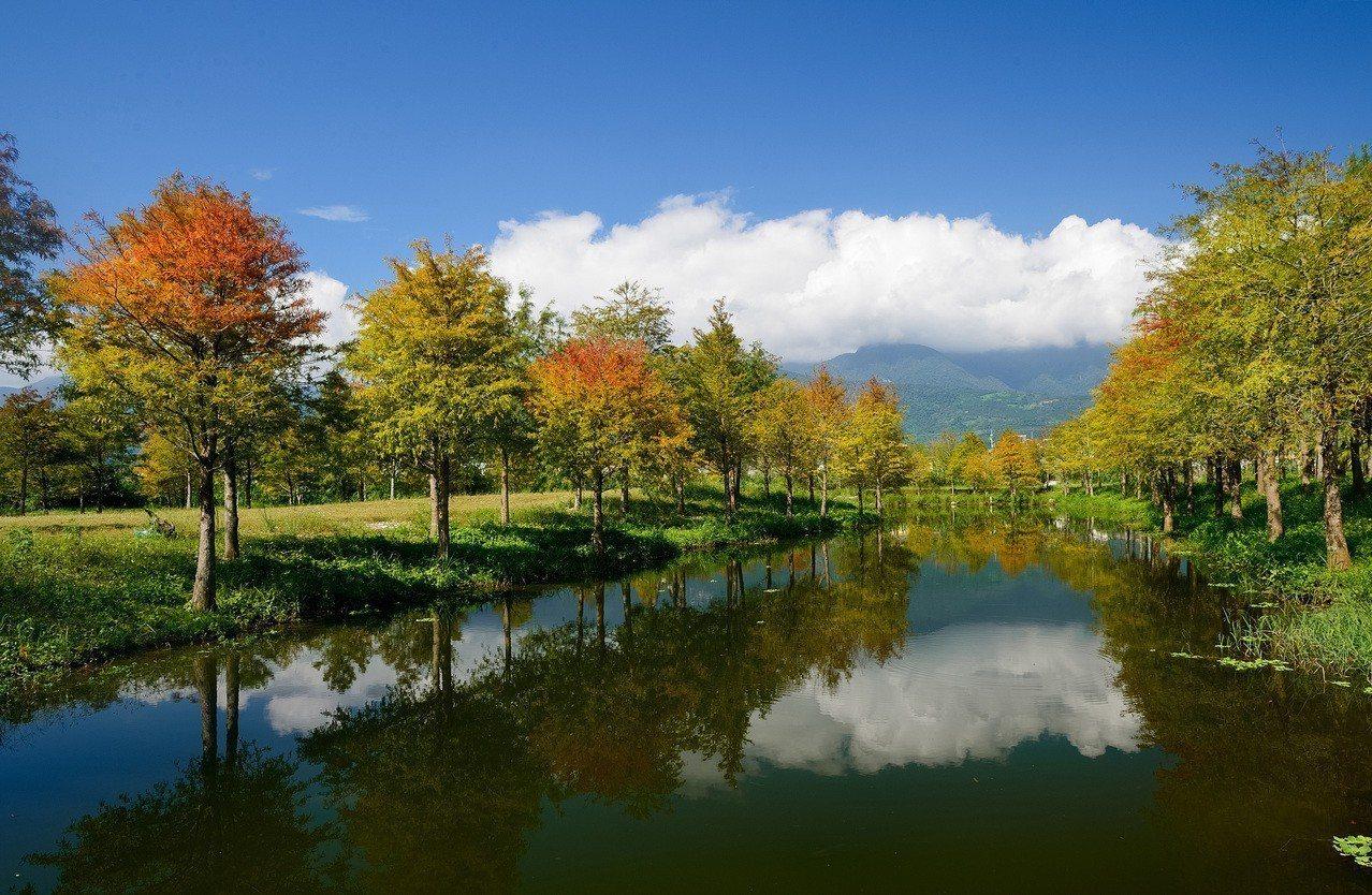 時序入冬,花蓮理想大地渡假飯店周邊的落羽松林,在藍天白雲襯托下猶如走入幽謐的仙境...