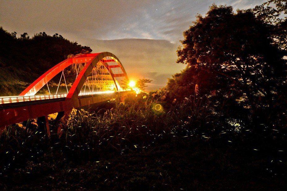 阿里山公路生態復育出現許多螢火蟲,許多景點甚至有業者帶團賞螢。圖/ 公路總局提供