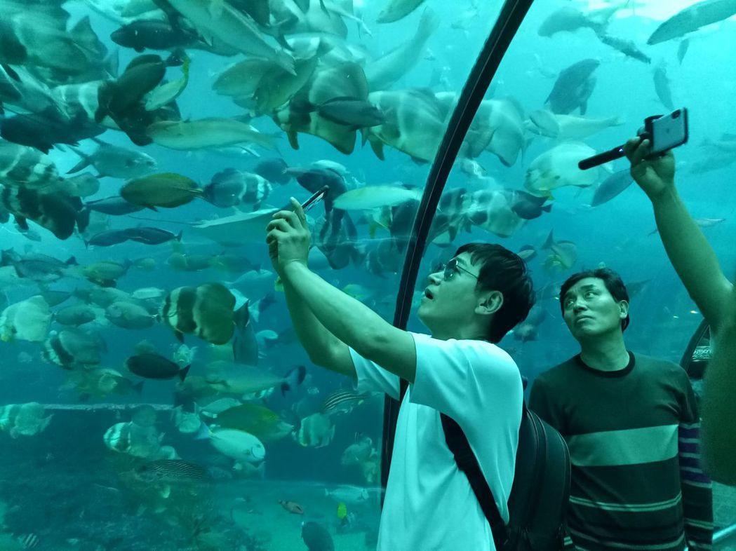全羅道ZOMAZOMA韓國明星棒球隊員走訪屏東海生館,驚呼海洋之美。圖/縣府提供