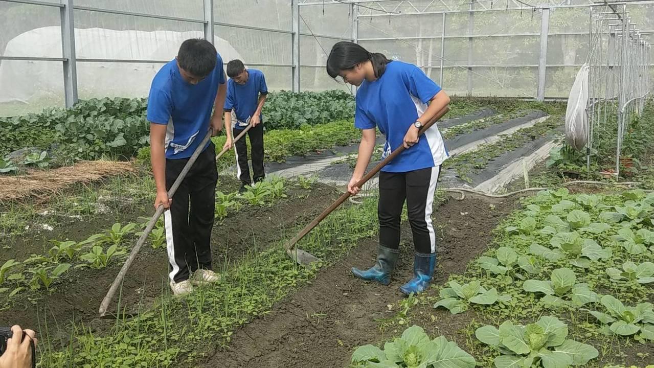 花蓮高農張惠寗(右)剛入學時連鋤頭都拿不穩,現在作畦又快又好。記者王燕華/攝影