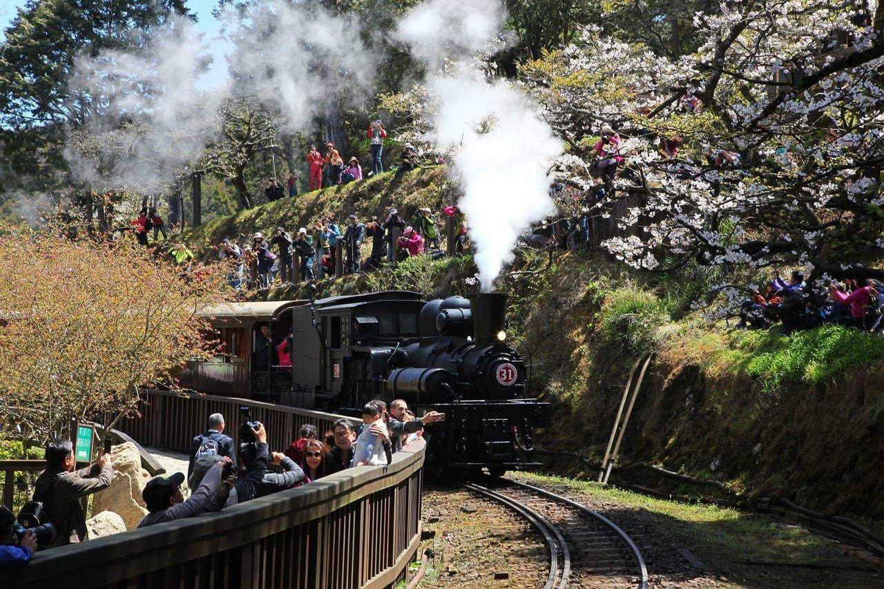 聖誕主題列車有31號蒸機火車頭和檜木列車,停靠阿里山、沼平、祝山、神木、二萬平站...