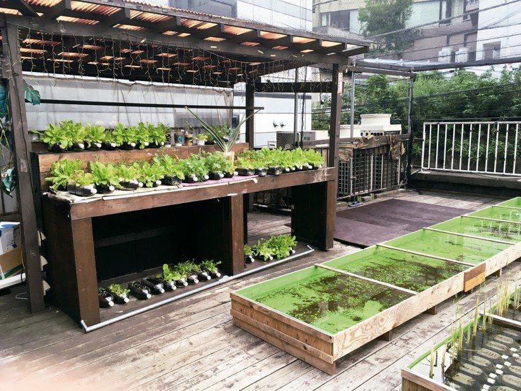 涉谷地區可見利用回收寶特瓶和簡易木箱,在屋頂種菜、種稻。 圖/朱慧芳