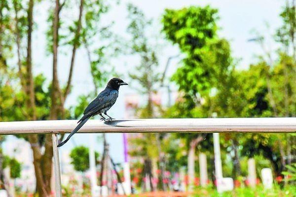 廣達67公頃的水湳中央公園,已逐漸出現鳥類、動物與昆蟲等生物。