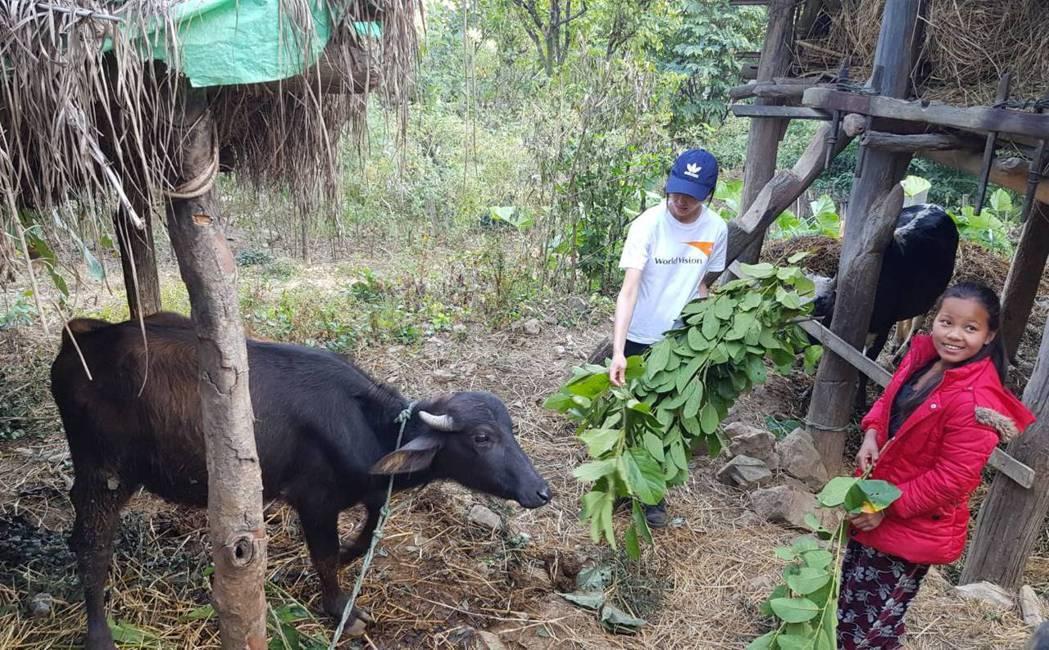 張鈞甯與Janu一起餵牛吃草。記者杜沛學/攝影