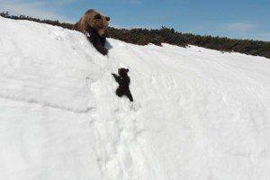 李奕萱/空拍機嚇到雪山小熊?空拍之前,你該知道的生態大小事