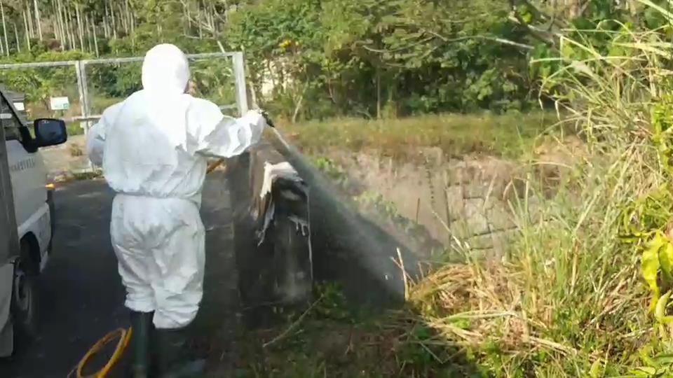 家畜疾病防治所到雞屍周邊消毒。圖/家畜疾病防治所提供