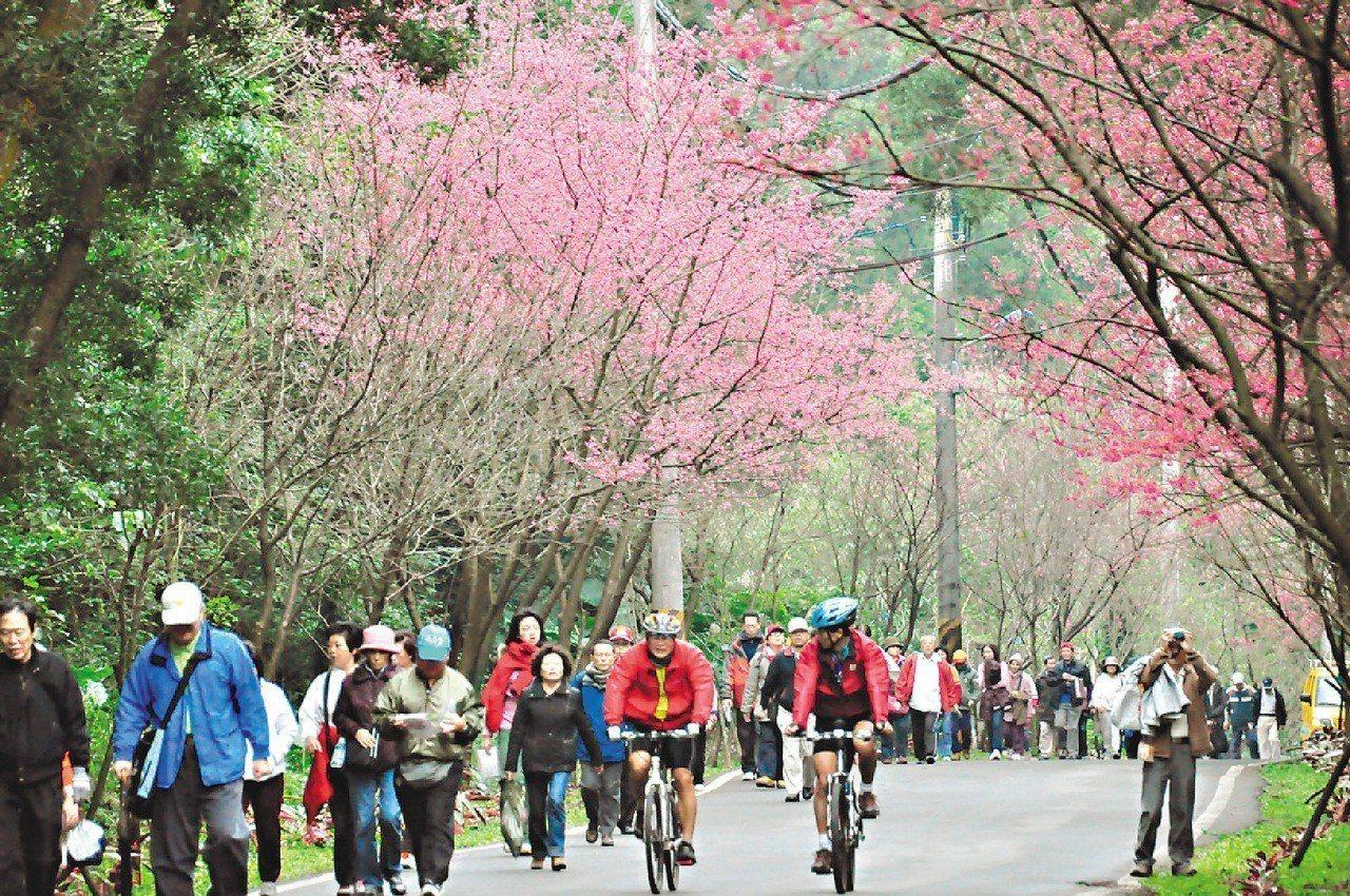 滬尾櫻花大道的健行活動。 圖∕淡水區公所提供
