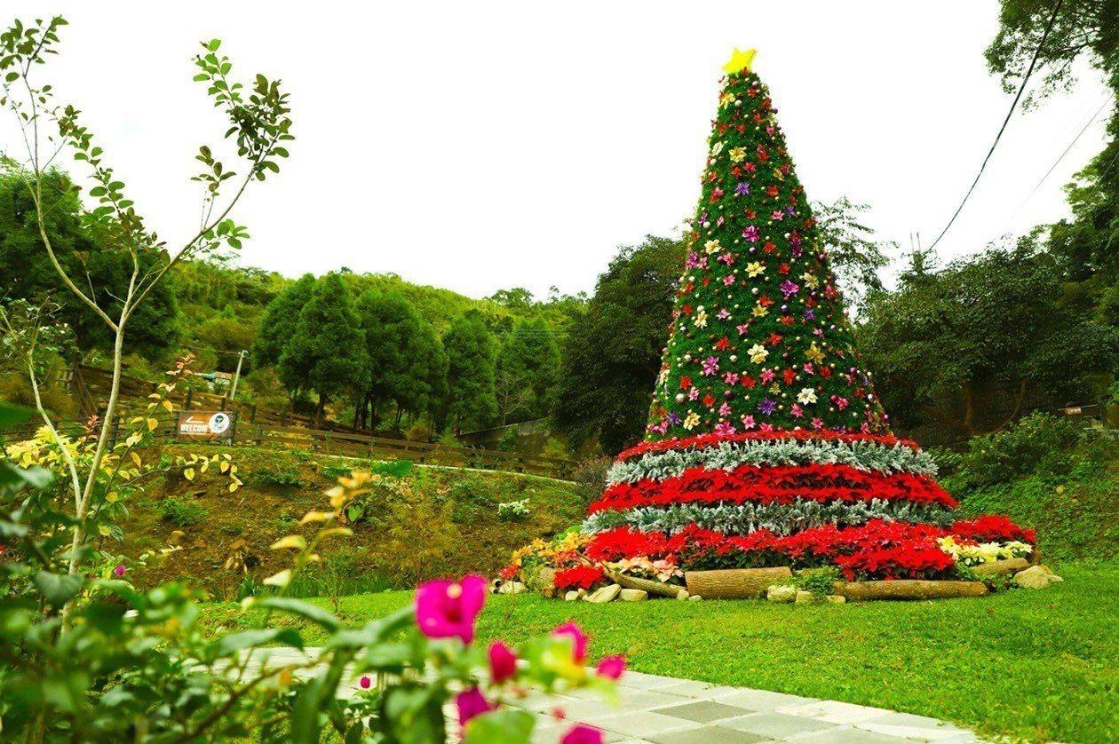第二屆桃園山城紅花節23日登場,台七桃花源休閒農業區已打造7.5公尺高的耶誕樹,...