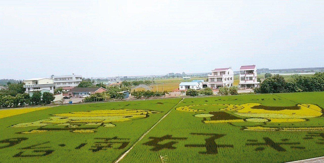 後壁區彩繪稻田可愛又吸睛。圖╱聯合報系資料照片