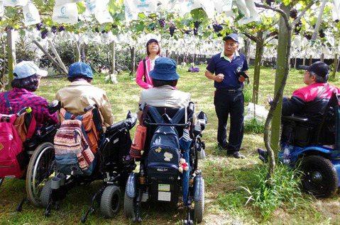 葡萄園的老闆非常樂於接待輪椅朋友,特地預留一大片空間,讓大家可以輕鬆地在園裡移動...