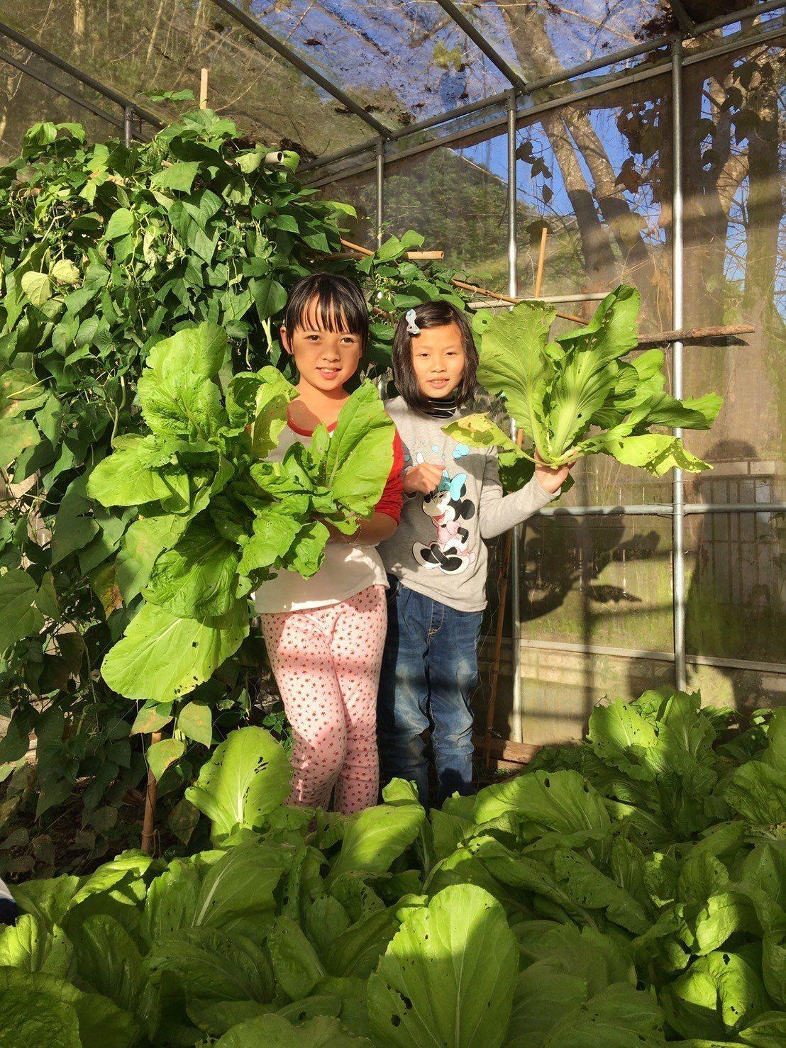 秋季課程結合食農教育,小學生農夫種菜摘菜。圖/仁和國小提供