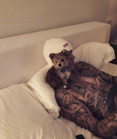 小賈斯汀的新愛犬。圖/摘自IG