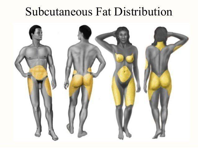 男女容易囤積脂肪的身體部位。圖取自微博