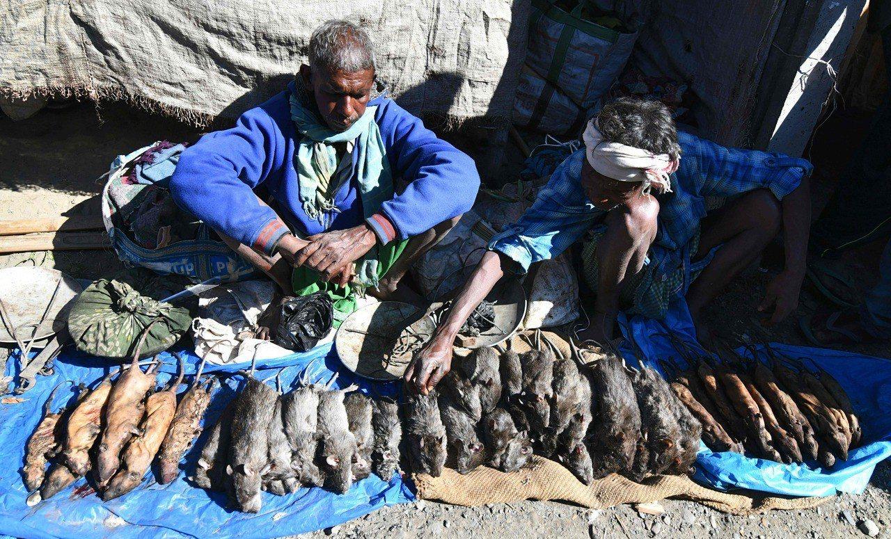在印度阿薩姆省的庫馬立卡塔村,老鼠肉比雞肉和豬肉更受顧客歡迎。 法新社