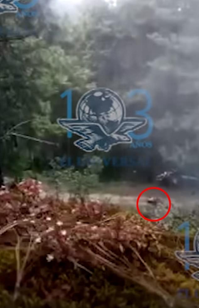 幫派成員埋伏在樹林中,等警車(紅圈處)出現時開槍。(取自英國每日郵報)