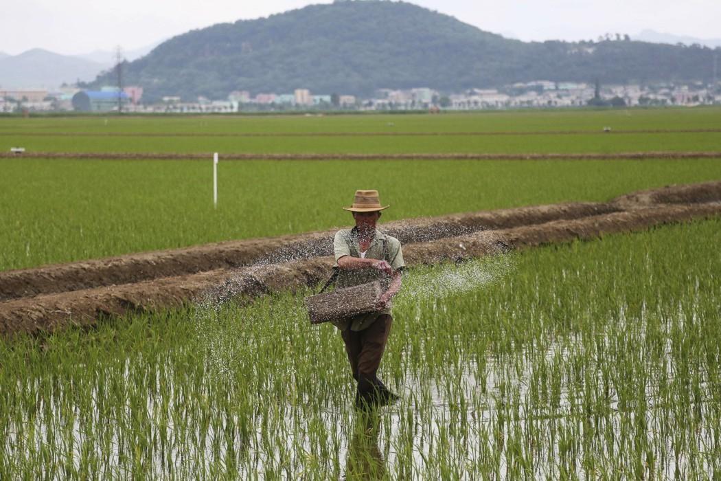 人道援助視為金援?北韓糧食危機,南韓援助北韓的理由