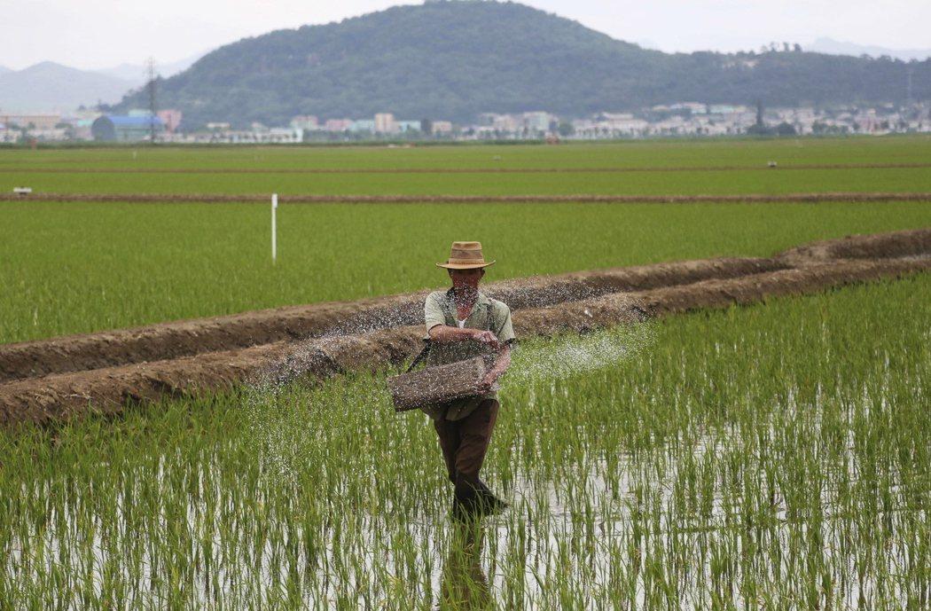 聯合國12月發布報告指出北韓糧食短缺,被北韓政府間接證實。(美聯社)