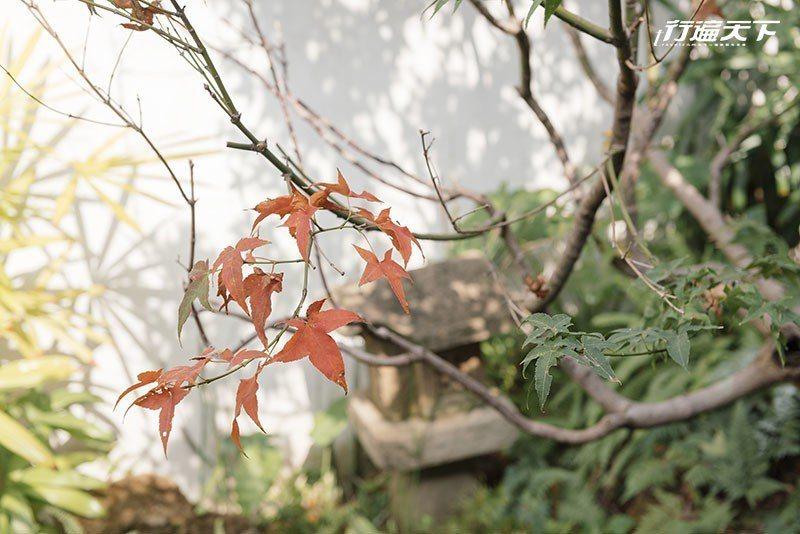 【獨一無二角落】 擺設石燈籠、石臼、竹瓢的日式庭園,楓樹在深秋悄悄染上了一抹紅葉...