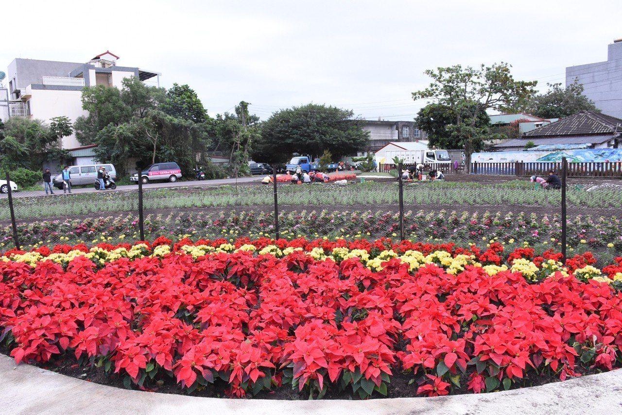 花蓮市公所在美崙地區的介壽新村社區花園打造花海,營造繽紛亮麗的冬日美景。圖/市公...