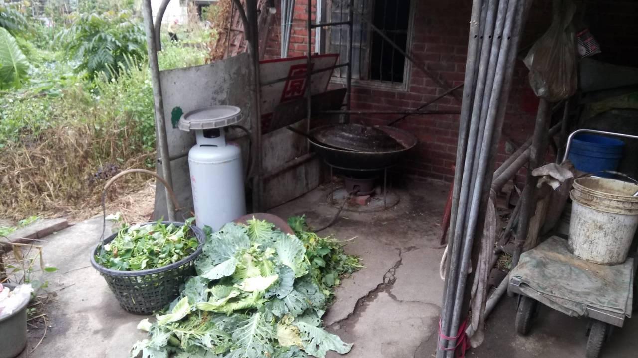 養豬業者需依「一般廢棄物回收清除處理辦法」規定,確實將廚餘高溫蒸煮攪拌,且中心溫...