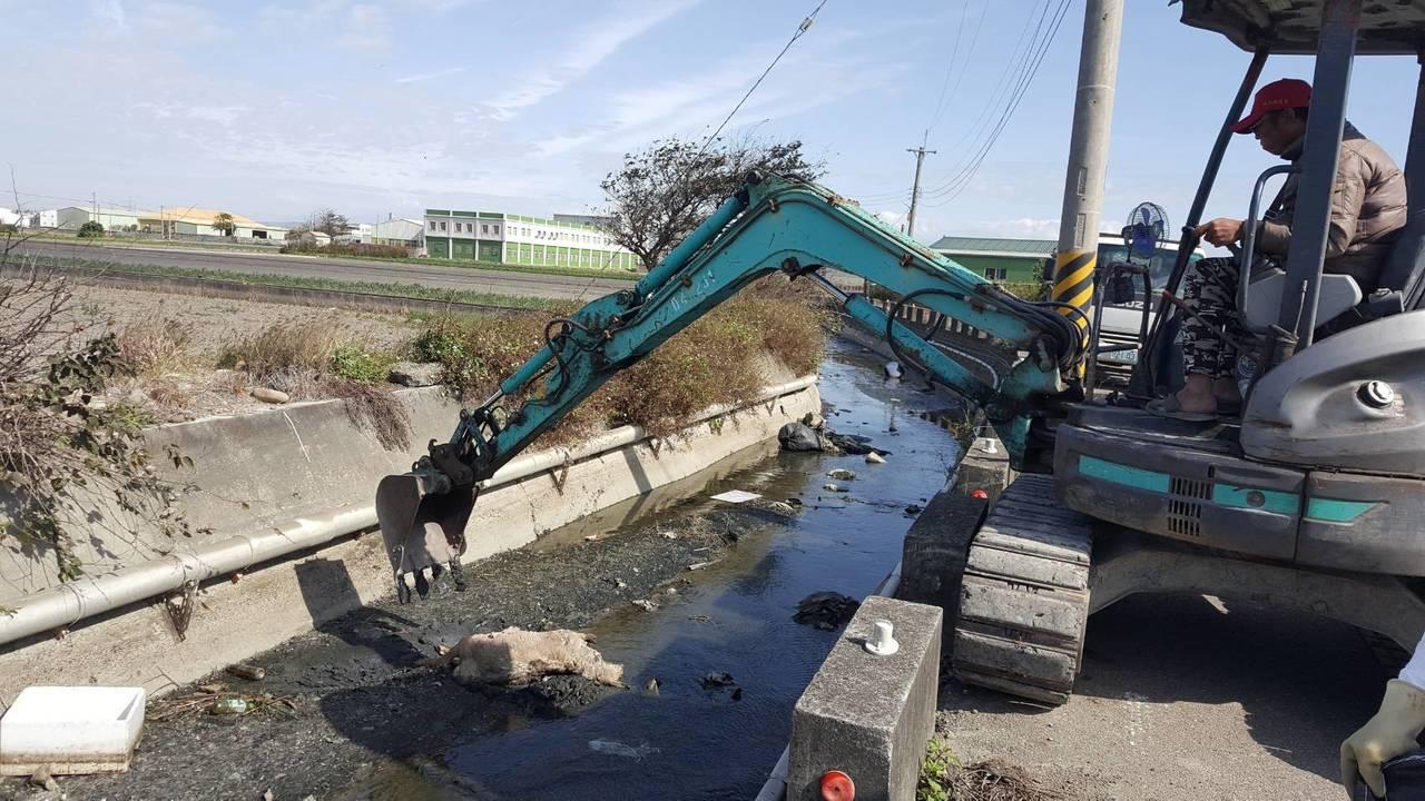 彰化縣政府水資處今天中午派員到海尾大排移除飄流的2頭死羊。記者何烱榮/翻攝