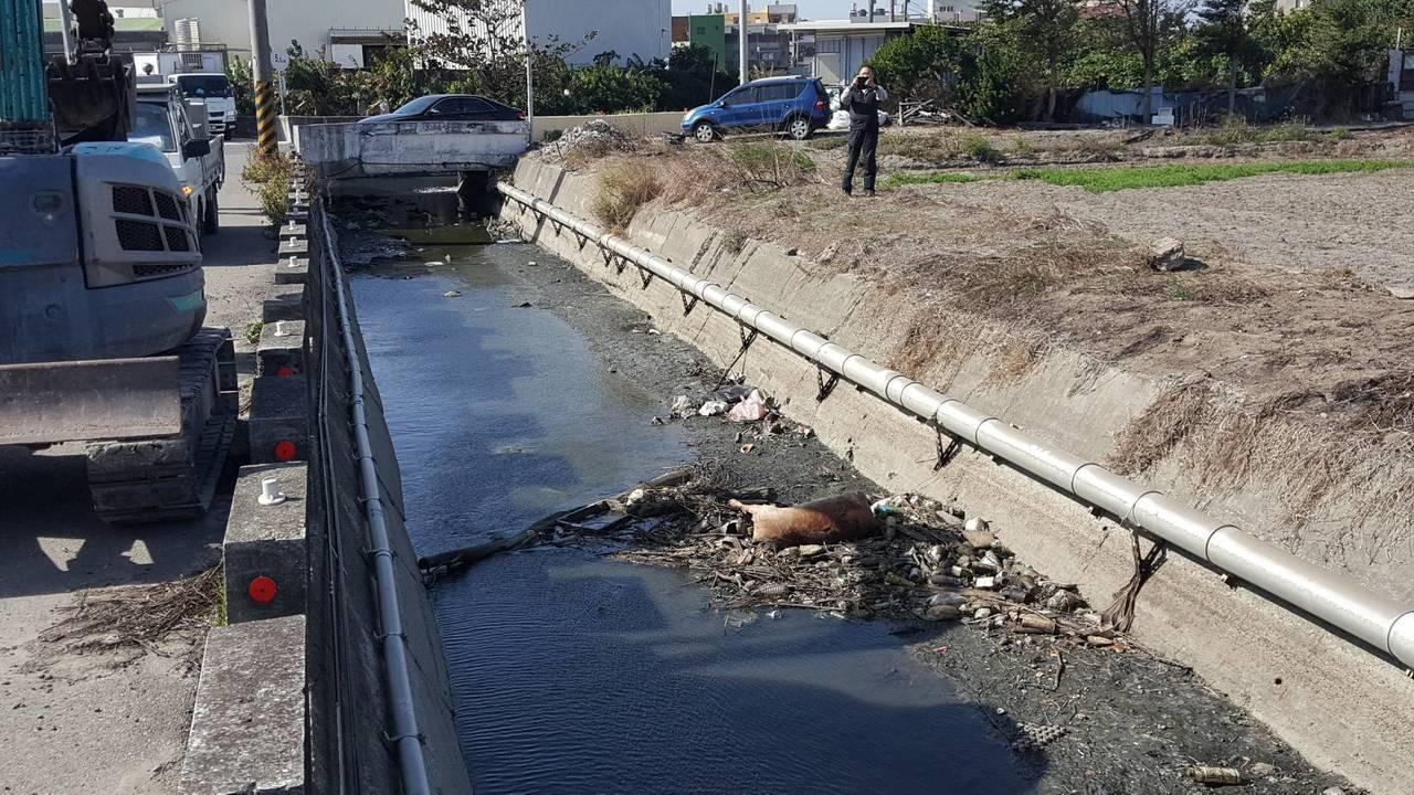 有人看到伸港鄉海尾大排裡有2頭「死豬」飄流並腐爛,引起一場騷動,幸好最後確認是死...