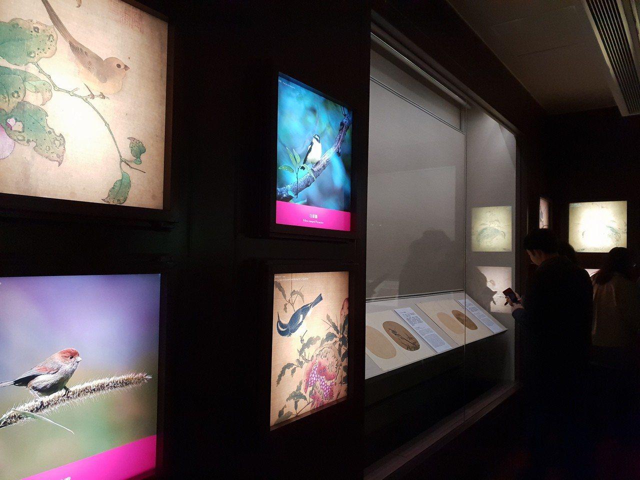 來禽圖展中,既展出畫作也搭配禽鳥的寫真照片一併陳列。記者陳宛茜/攝影