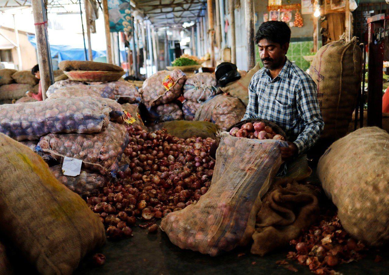 今年印度洋葱價格暴跌,農民苦不堪言,圖為孟買一處果菜市場內的商家正在整理洋葱。(...