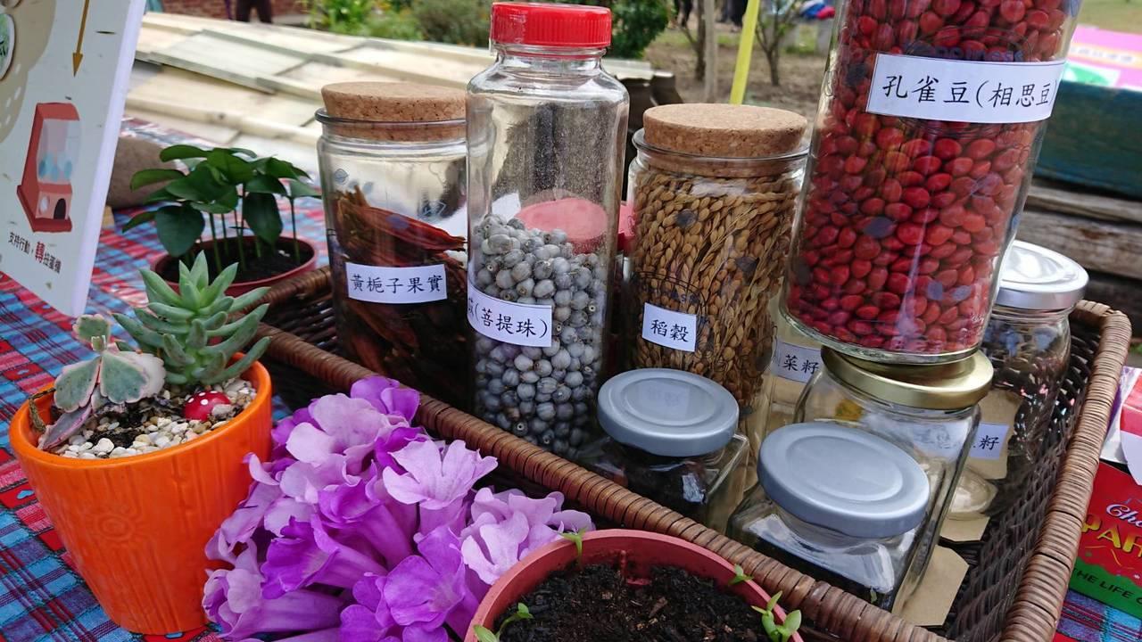 上林社區收集社區作物種子放在扭蛋當中,讓參觀民眾投幣玩扭蛋拿種子回家。記者卜敏正...