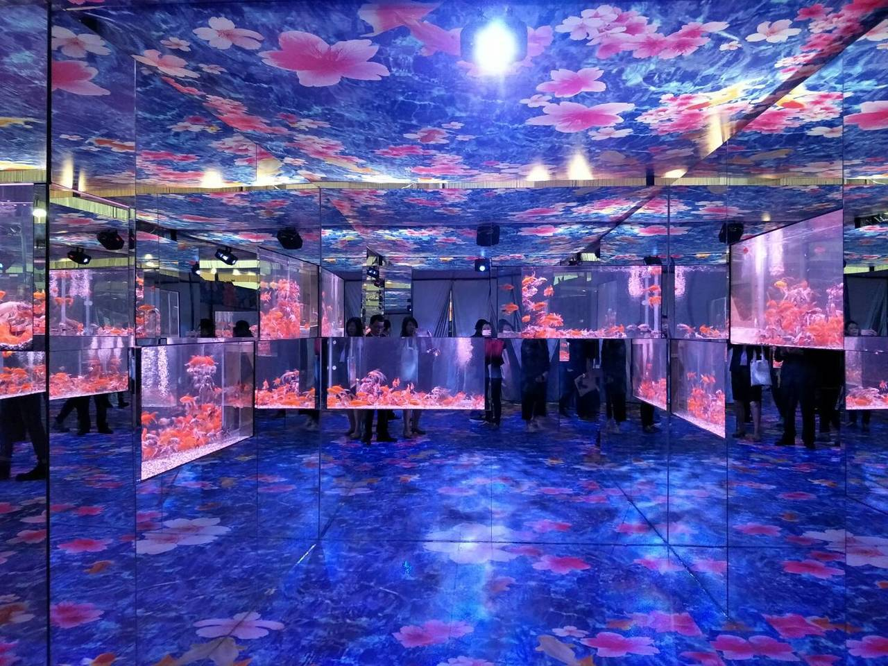 元旦四天連假展開,國立海洋科技博物館「金玉滿堂-迎春金魚特展」也盛大揭幕,即日起...