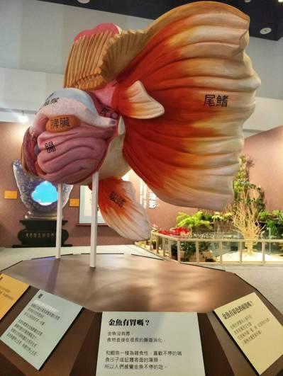 國立海洋科技博物館「金玉滿堂-迎春金魚特展」從科學、文化、美學等多元角度,展現金...