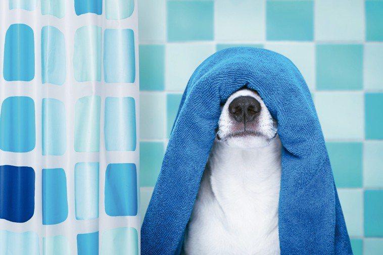 你以為乾淨的毛巾,其實一點都不乾淨。 圖/123RF