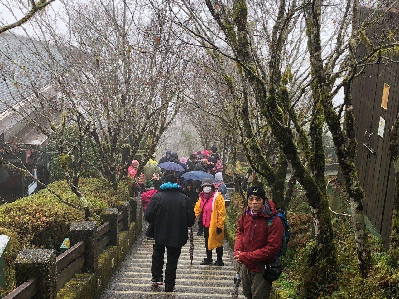 太平山森林遊樂區霧氣白茫朦朧美,但溫度不夠,還沒有冷到下雪結霜。圖/羅東林管處提...