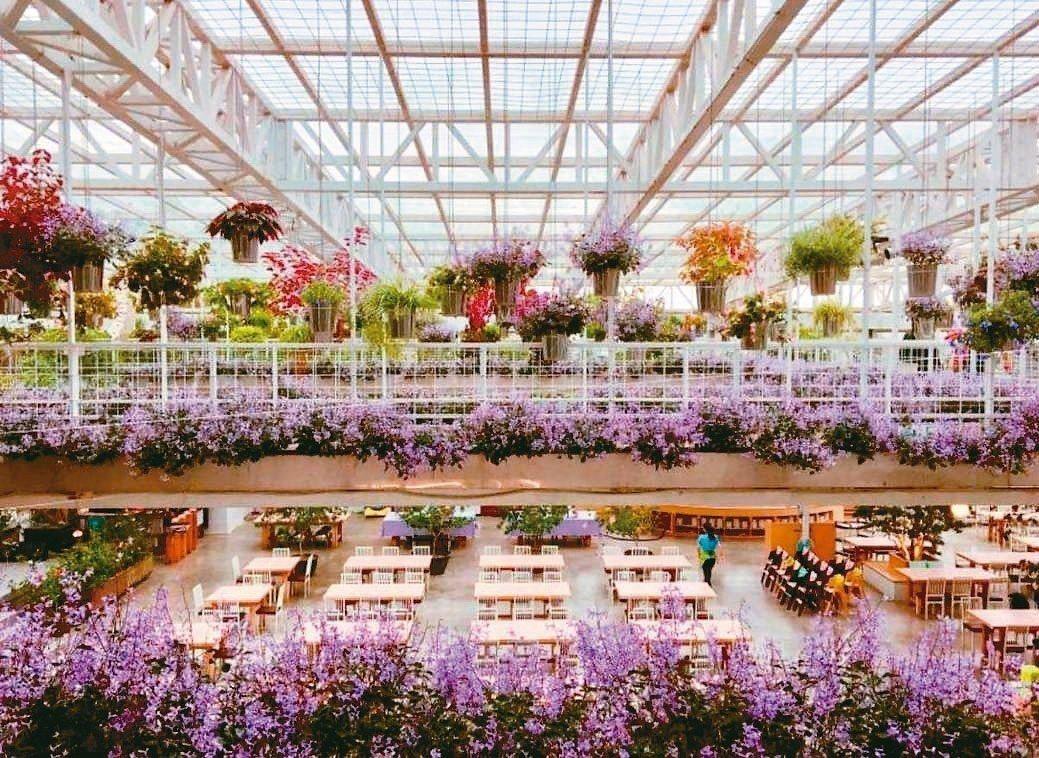 香草菲菲芳香植物博物館內有成千上萬株植物。 記者戴永華/攝影