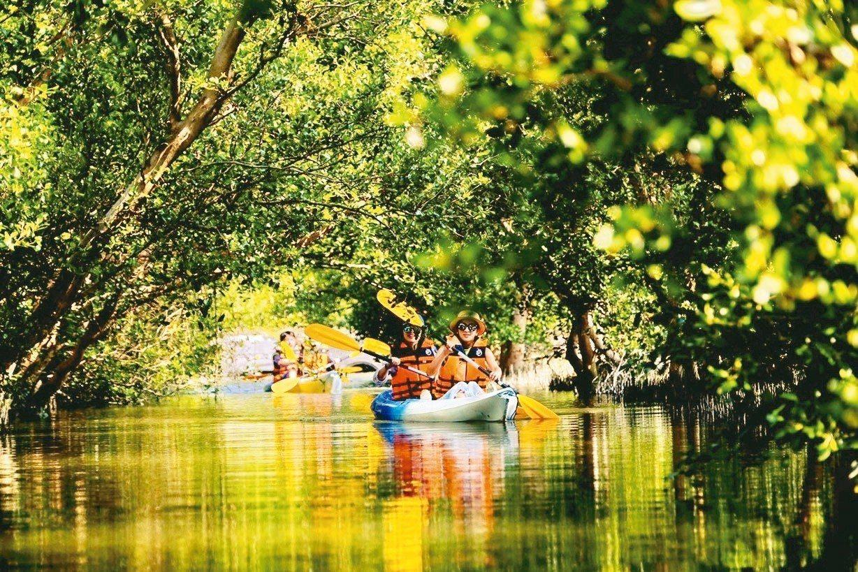 大鵬灣國際休閒特區的獨木舟才剛推出「紅樹林秘境綠色隧道」行程。 鵬管處/提供