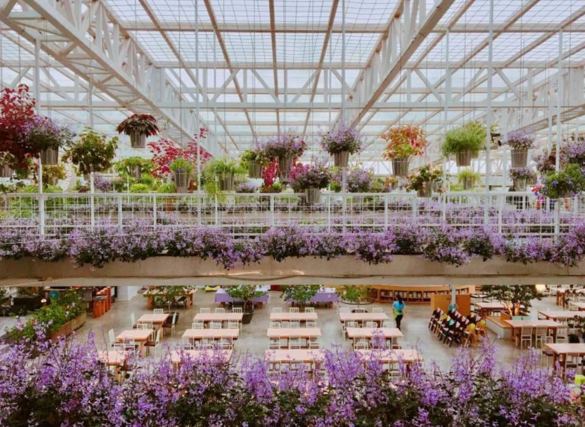 香草菲菲芳香植物博物館是環保署認證的環境教育設施場所,館內有成千上萬株植物,浪漫...