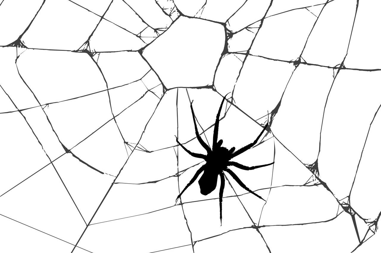 蜘蛛示意圖。男子太害怕蜘蛛,情緒失控大吼「你怎麼不去死」,引來警方關切。圖/in...