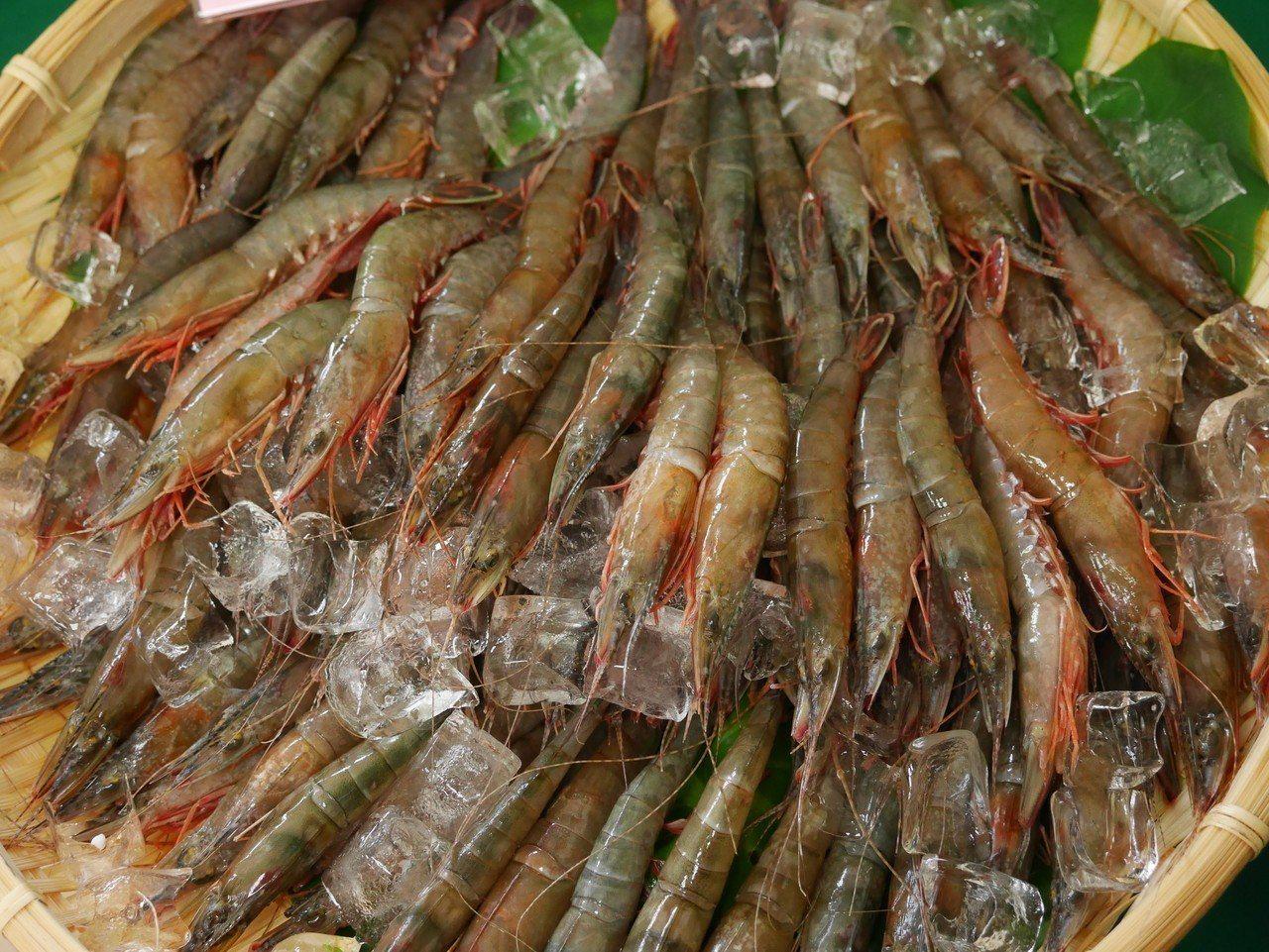 陳傳文說,劍蝦有它特別的甜味,肉質Q彈,不是養殖的白蝦可取代。記者吳淑君/攝影