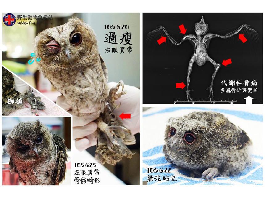 圖/野生動物急救站保育員張雅林提供