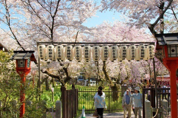 ▲日本櫻花季景點-京都平野神社櫻花祭。(圖/攝影者:Kimon Berlin, ...