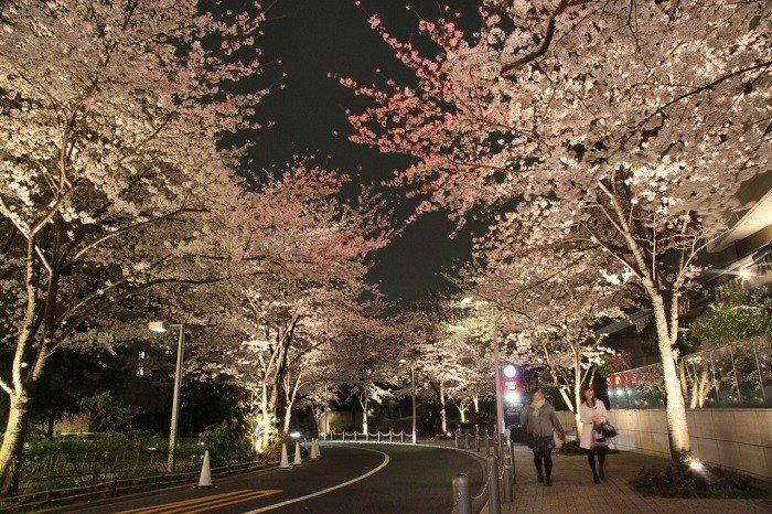 ▲日本櫻花季景點-六本木新城。(圖/©Yasufumi Nishi/©JNTO)