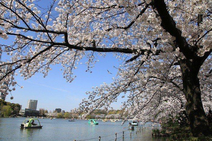 ▲日本櫻花季景點-上野公園。(圖/©Yasufumi Nishi/©JNTO)