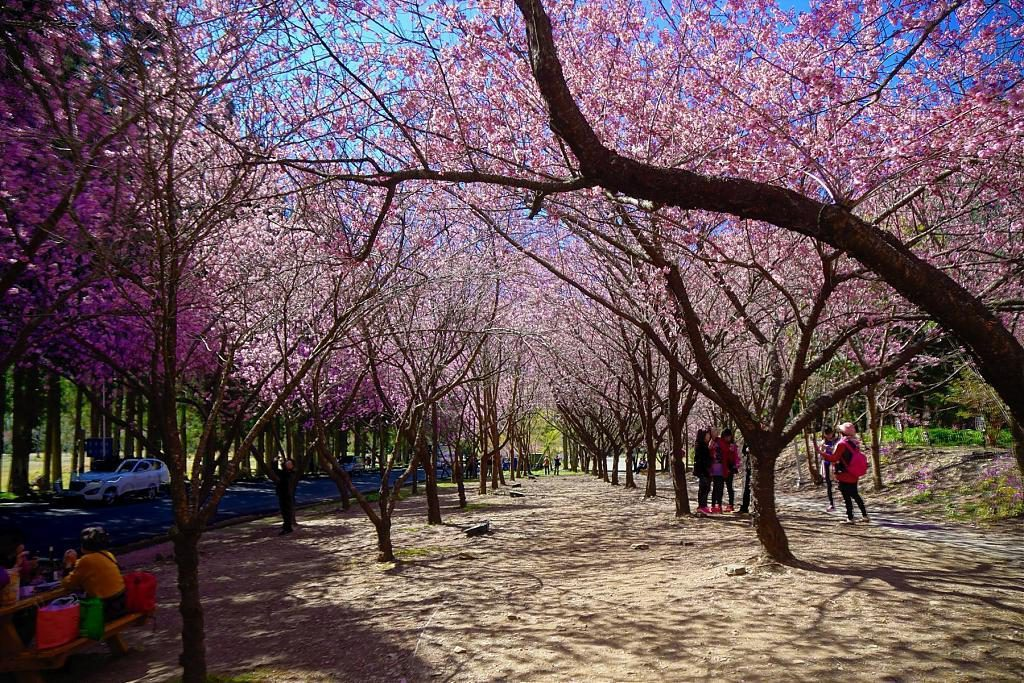 ▲農曆春節旅遊-武陵農場。(圖/Tripbaa趣吧!亞洲自由行專家)