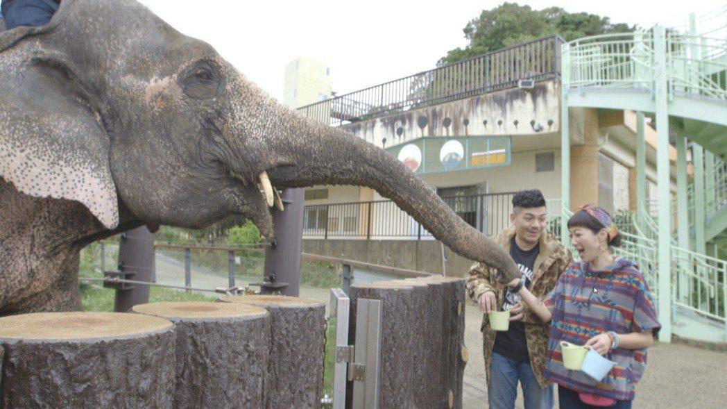 史丹利(左)和老婆Gigi餵食大象。圖/艾迪昇提供