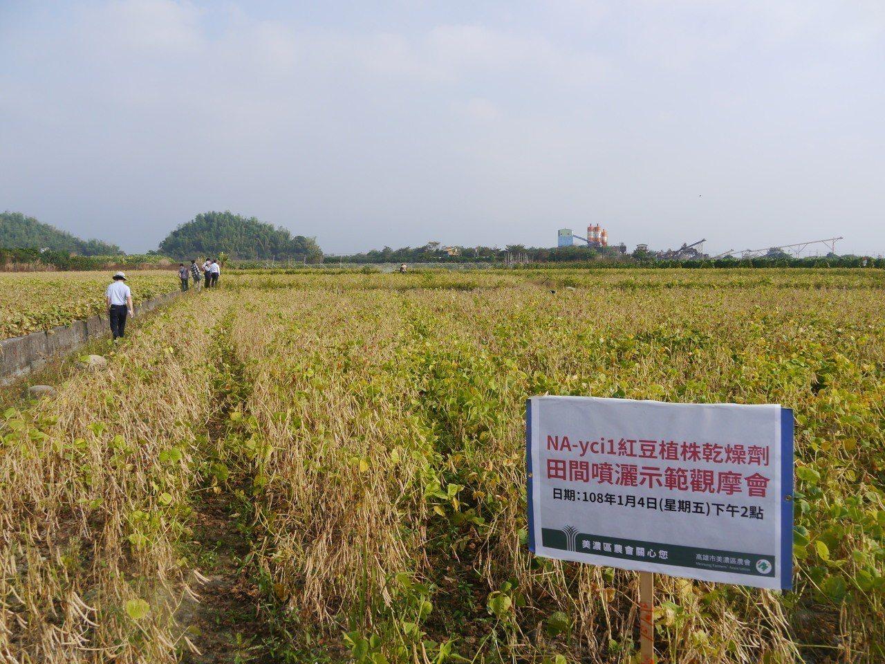 高雄美濃紅豆種植面積1200公頃,許多農民使用巴拉刈當落葉劑,以後必須改變用藥習...