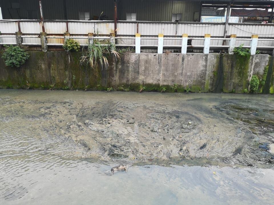 民眾在泰山貴子坑溪床中間發現一具動物屍體。圖/翻攝自ㄨㄚ是泰山人臉書社團