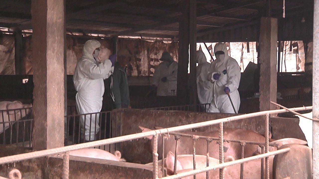 金門縣動植防疫所昨針對豬屍發生地半徑5公里範圍內的10處豬場進行採樣,並採集血液...