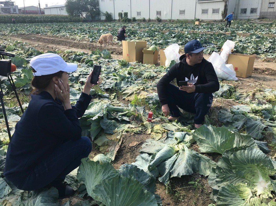 有超狂直播主之稱的林揚竣(右),為了挺菜農,以直播方式販賣高麗菜,集結粉絲一起做...